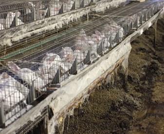 rep cec conigli in gabbia.JPG