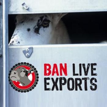 Esportazioni di animali vivi: ultime notizie e prossimi passi | CIWF Italia